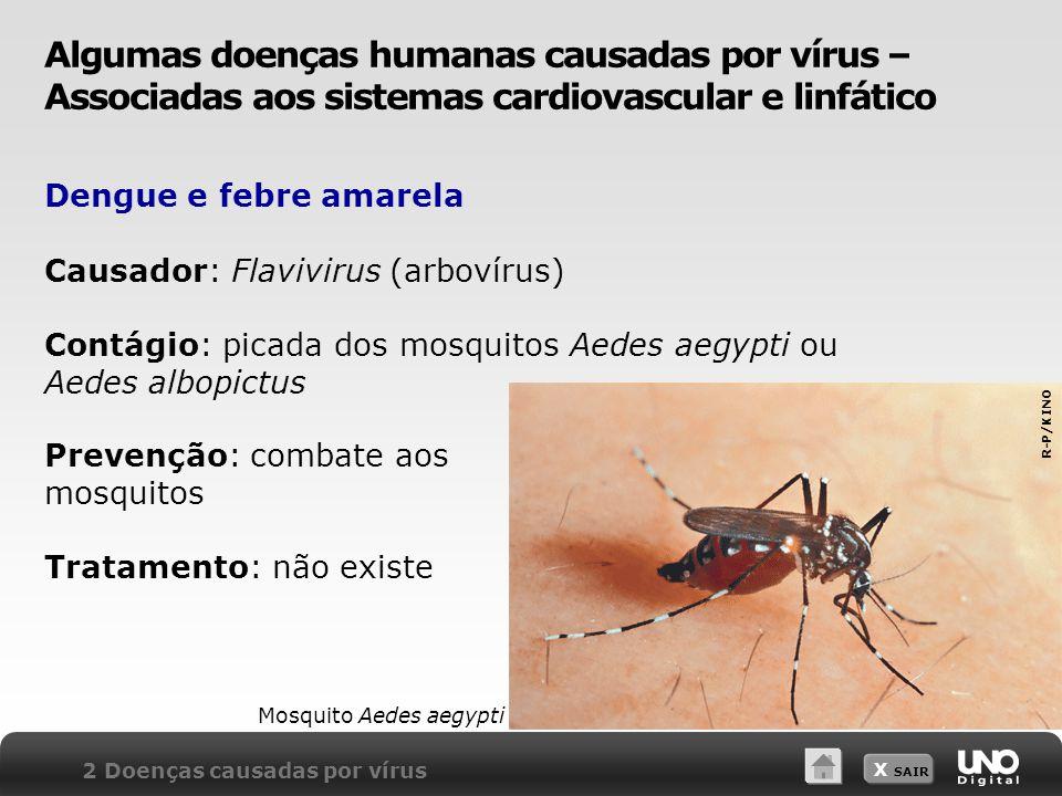 Algumas doenças humanas causadas por vírus – Associadas aos sistemas cardiovascular e linfático