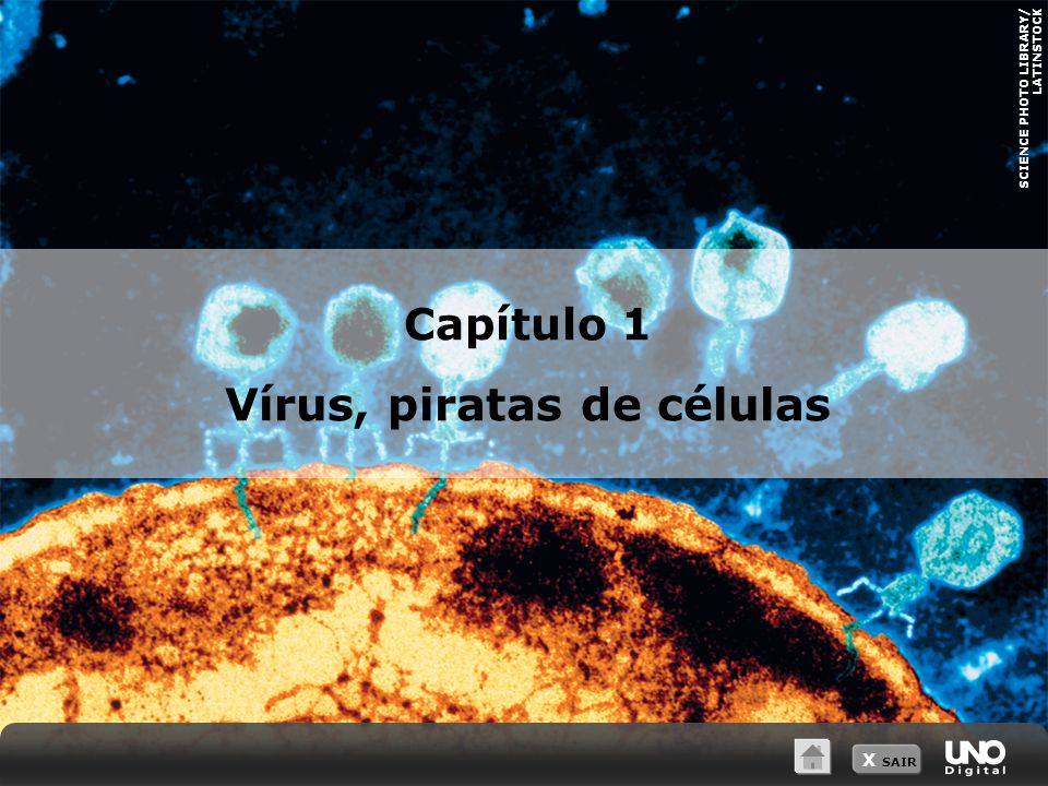 Vírus, piratas de células