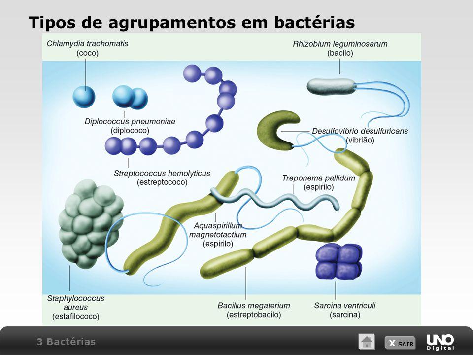 Tipos de agrupamentos em bactérias