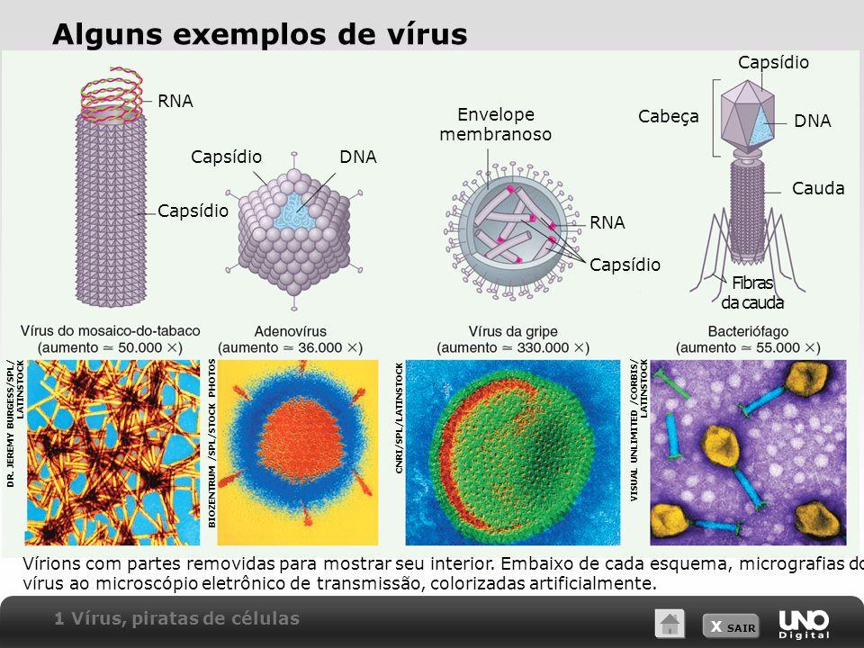 Alguns exemplos de vírus