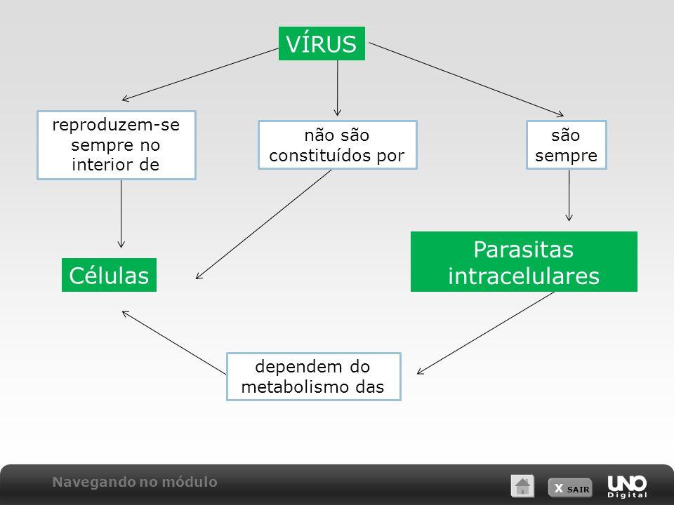 VÍRUS Parasitas intracelulares Células reproduzem-se sempre no