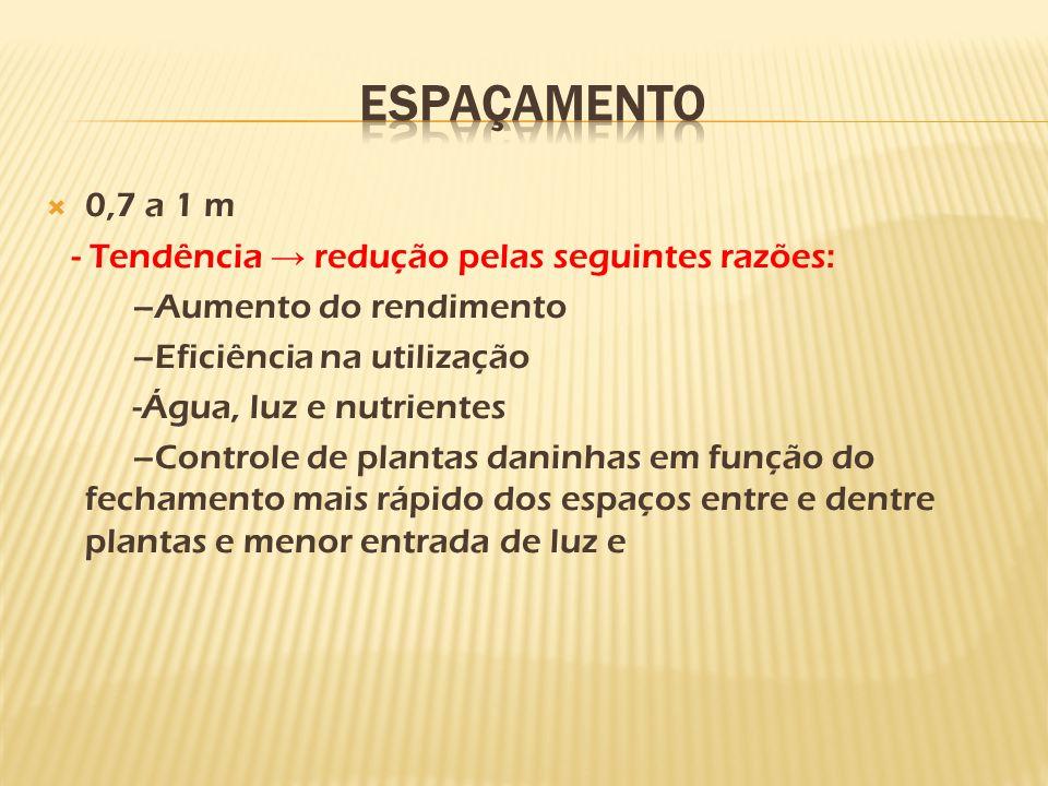 ESPAÇAMENTO 0,7 a 1 m - Tendência → redução pelas seguintes razões: