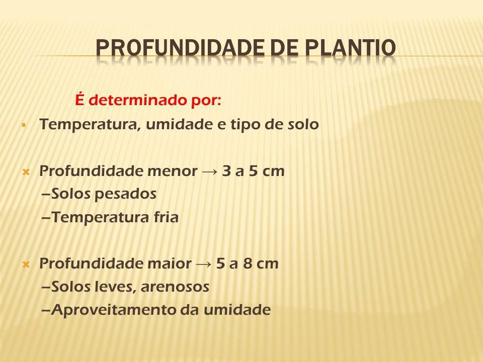 Profundidade de plantio