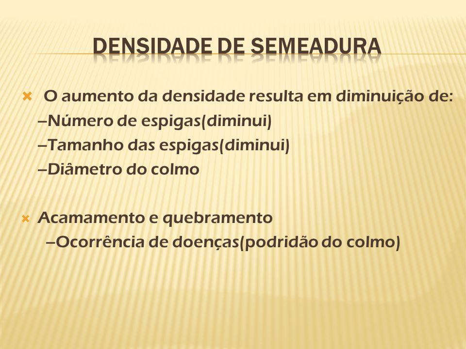 DENSIDADE DE SEMEADURA