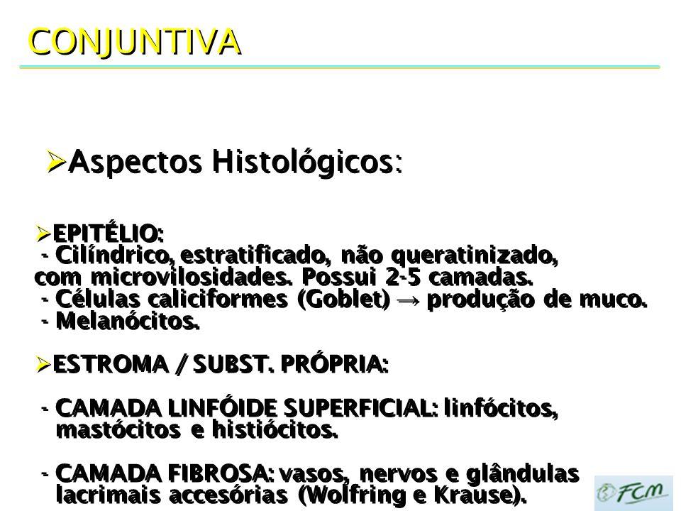 CONJUNTIVA Aspectos Histológicos: EPITÉLIO:
