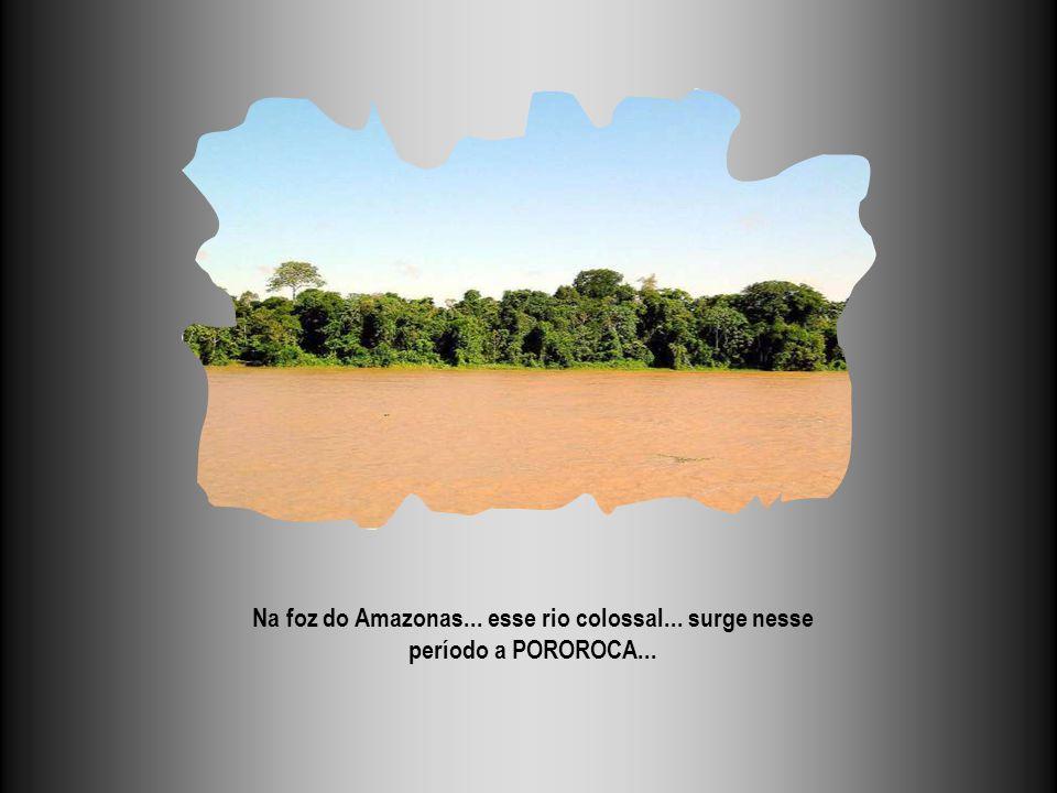 Na foz do Amazonas... esse rio colossal... surge nesse período a POROROCA...