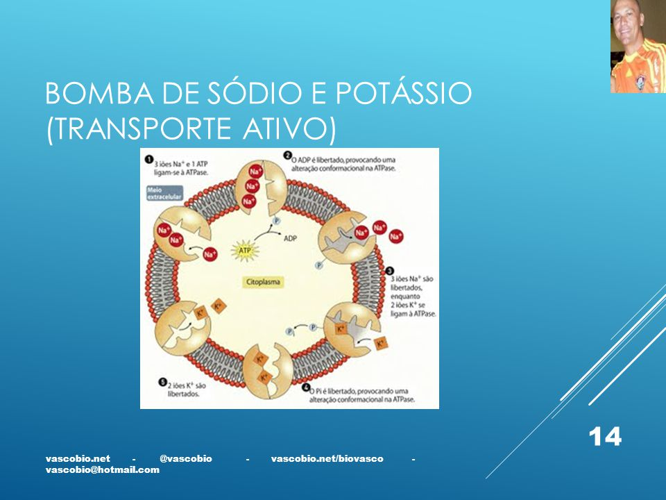 Bomba de sódio e potássio (transporte ativo)