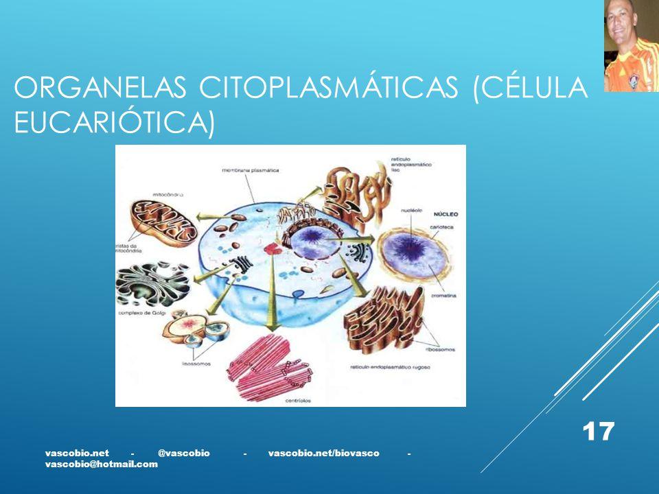Organelas citoplasmáticas (célula eucariótica)