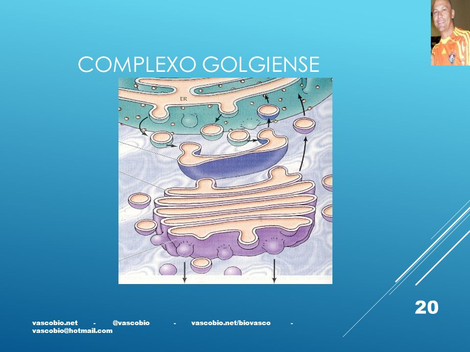 COMPLEXO GOLGIENSE vascobio.net - @vascobio - vascobio.net/biovasco - vascobio@hotmail.com.