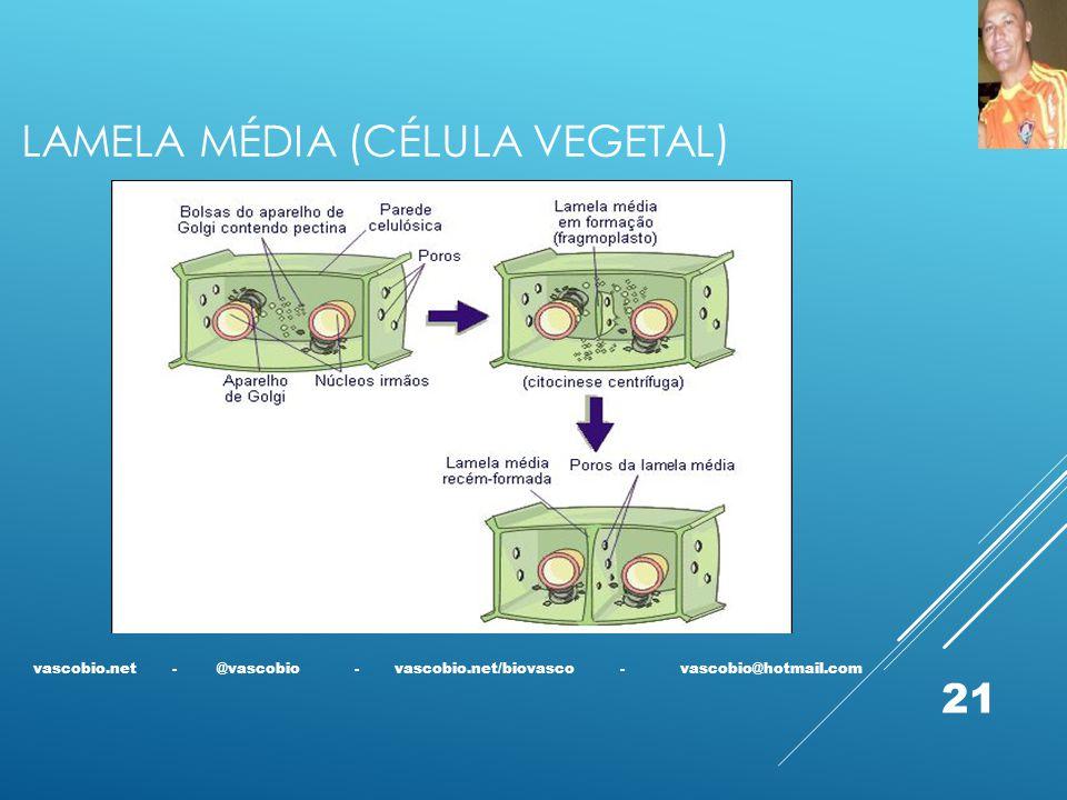 Lamela média (CÉLULA VEGETAL)