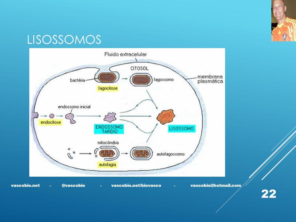 LISOSSOMOS vascobio.net - @vascobio - vascobio.net/biovasco - vascobio@hotmail.com.