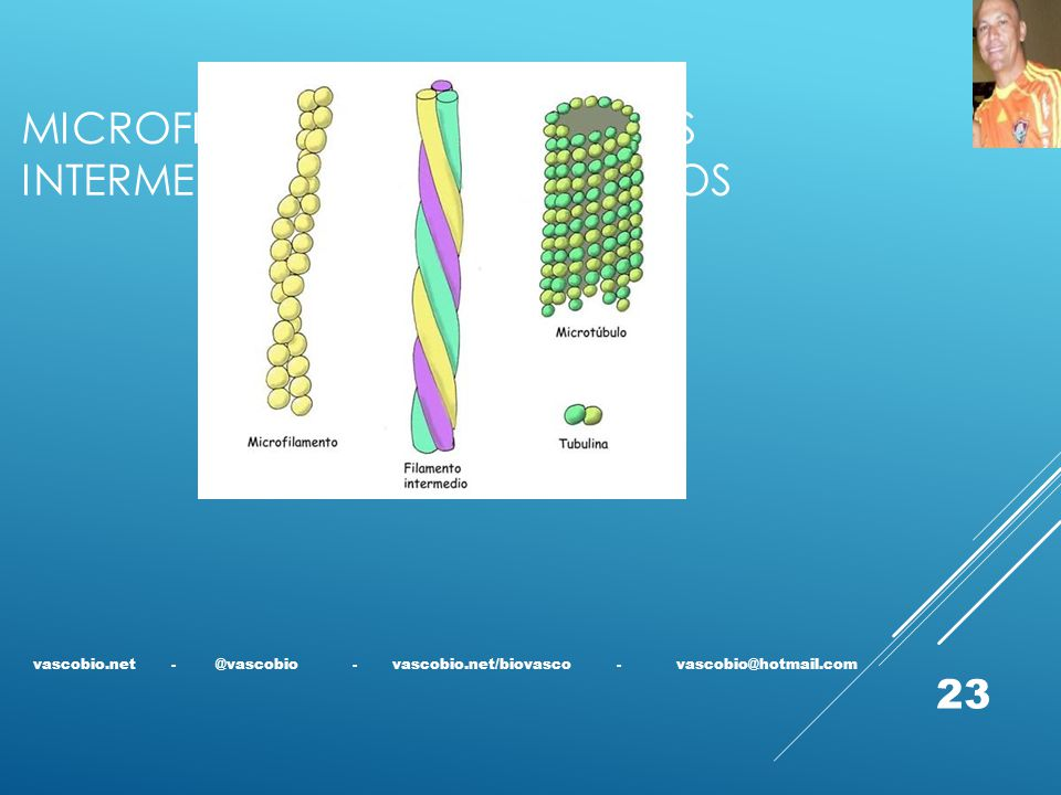 Microfilamentos, filamentos intermediários e microtúbulos