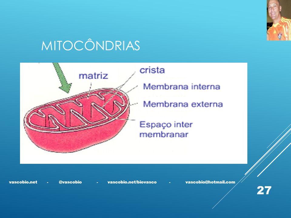 mitocôndrias vascobio.net - @vascobio - vascobio.net/biovasco - vascobio@hotmail.com.