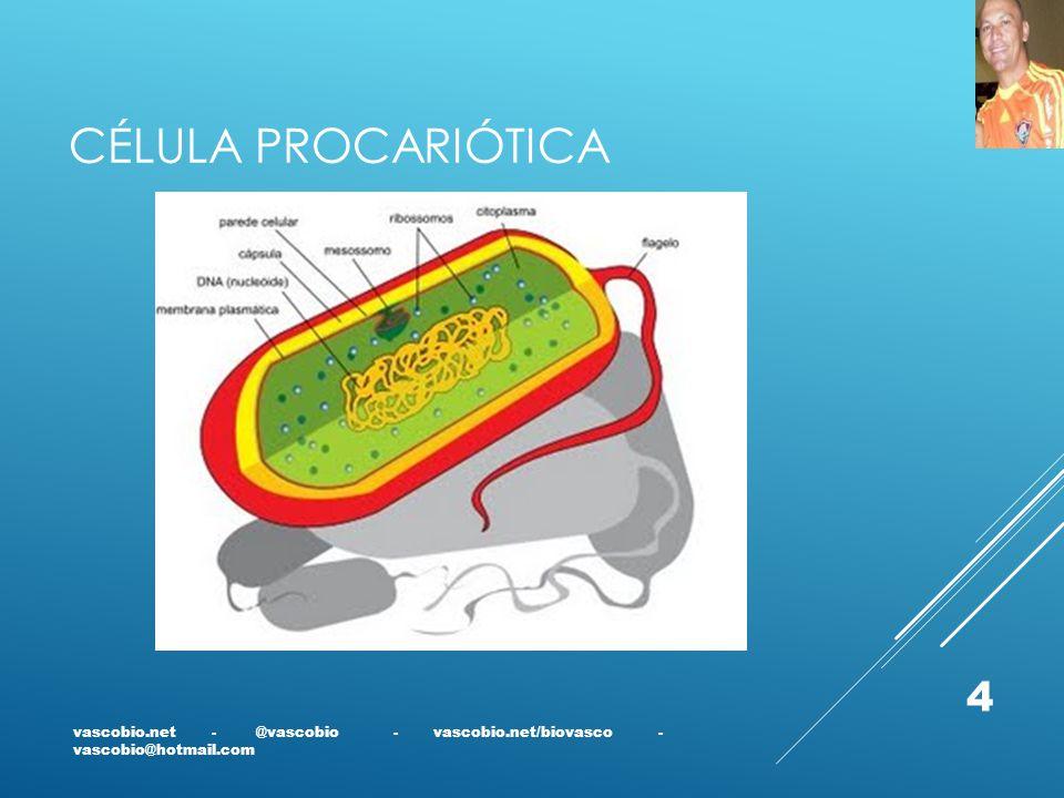 Célula Procariótica vascobio.net - @vascobio - vascobio.net/biovasco - vascobio@hotmail.com.