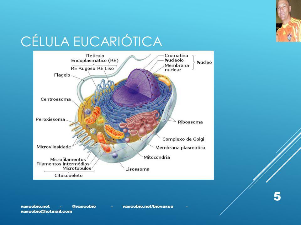 Célula Eucariótica vascobio.net - @vascobio - vascobio.net/biovasco - vascobio@hotmail.com.