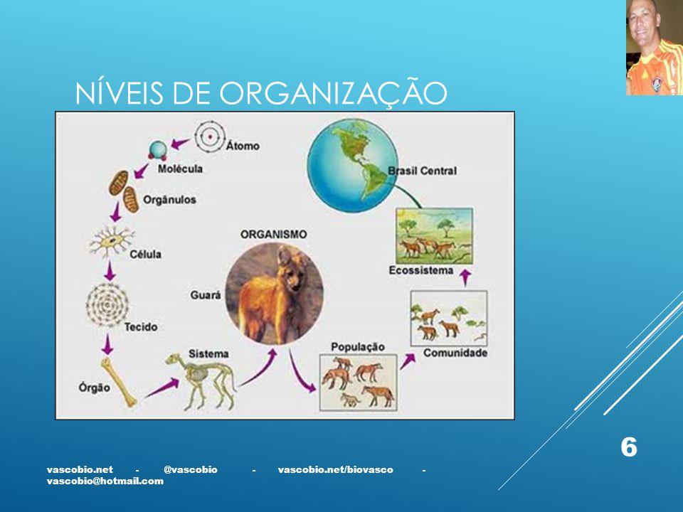 Níveis de Organização vascobio.net - @vascobio - vascobio.net/biovasco - vascobio@hotmail.com.