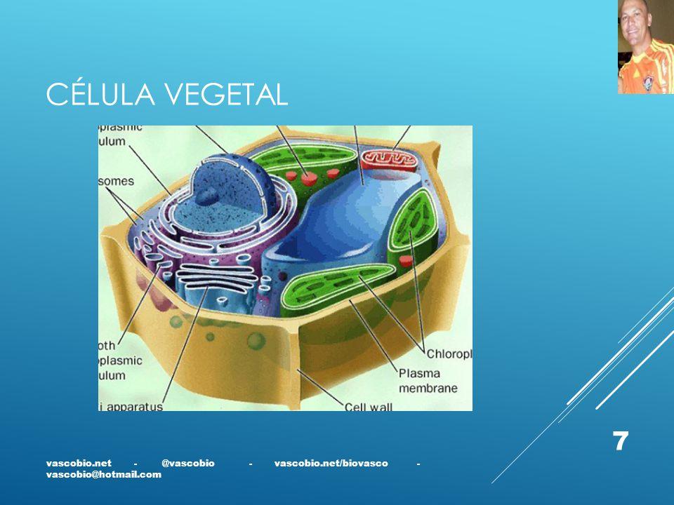 Célula vegetal vascobio.net - @vascobio - vascobio.net/biovasco - vascobio@hotmail.com.