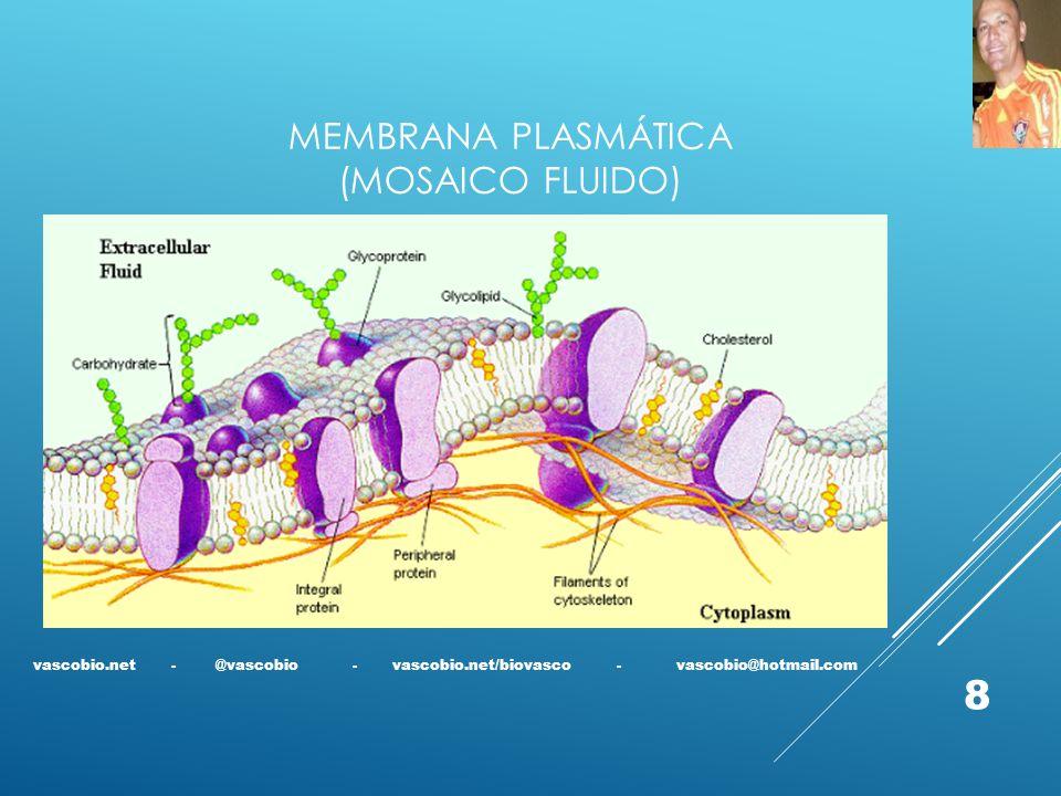 Membrana plasmática (mosaico fluido)