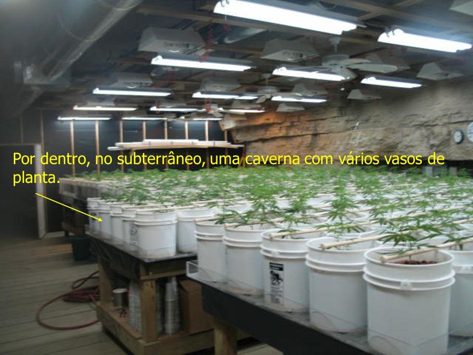 Por dentro, no subterrâneo, uma caverna com vários vasos de planta.