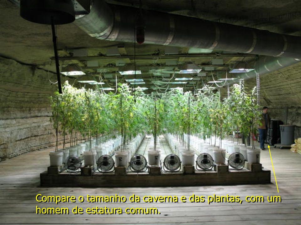 Compare o tamanho da caverna e das plantas, com um homem de estatura comum.