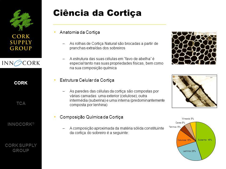Ciência da Cortiça Anatomia da Cortiça Estrutura Celular da Cortiça