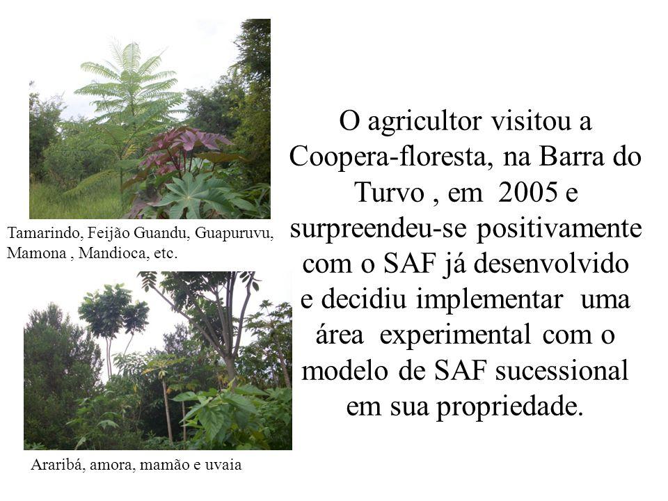 O agricultor visitou a Coopera-floresta, na Barra do Turvo , em 2005 e surpreendeu-se positivamente com o SAF já desenvolvido e decidiu implementar uma área experimental com o modelo de SAF sucessional em sua propriedade.