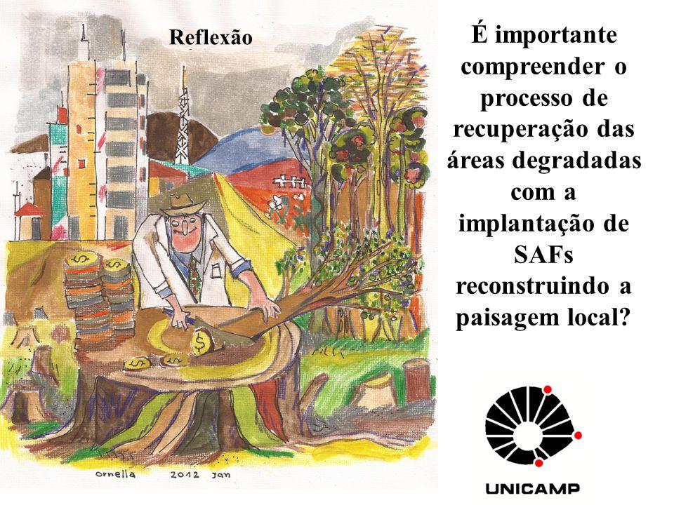 É importante compreender o processo de recuperação das áreas degradadas com a implantação de SAFs reconstruindo a paisagem local