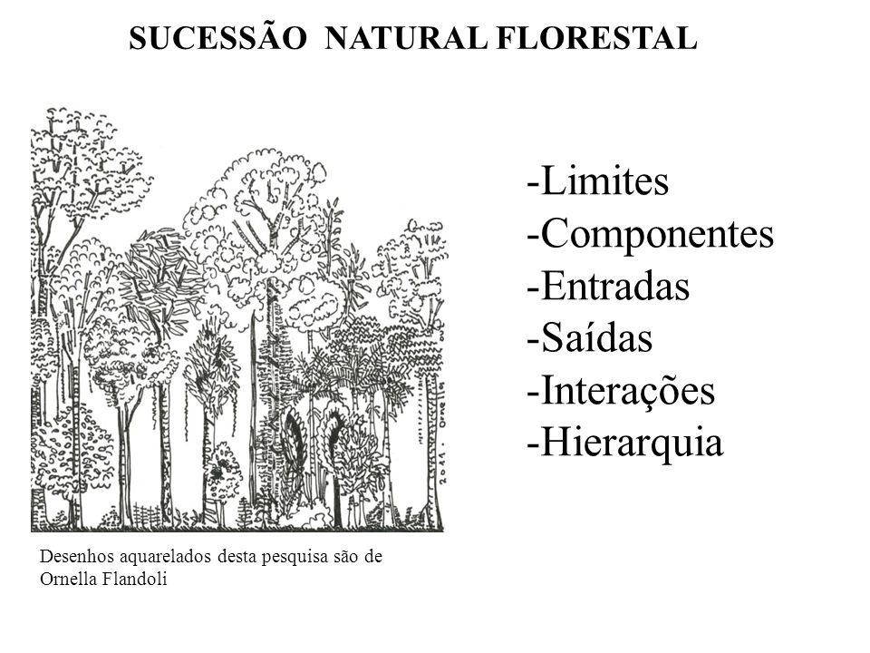 SUCESSÃO NATURAL FLORESTAL