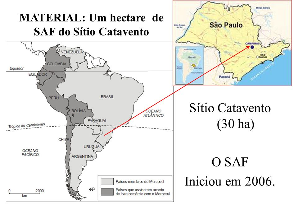 MATERIAL: Um hectare de SAF do Sítio Catavento