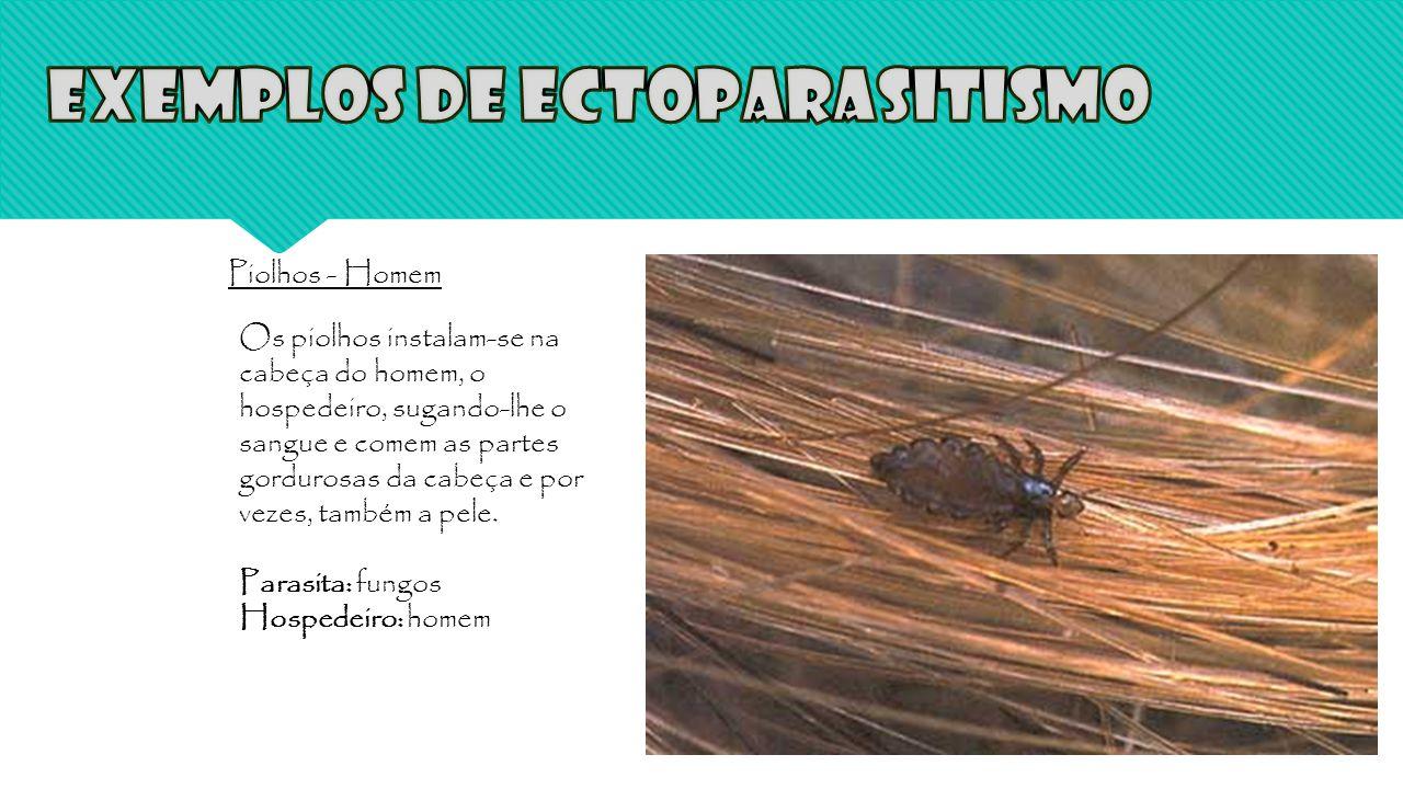 Exemplos de Ectoparasitismo