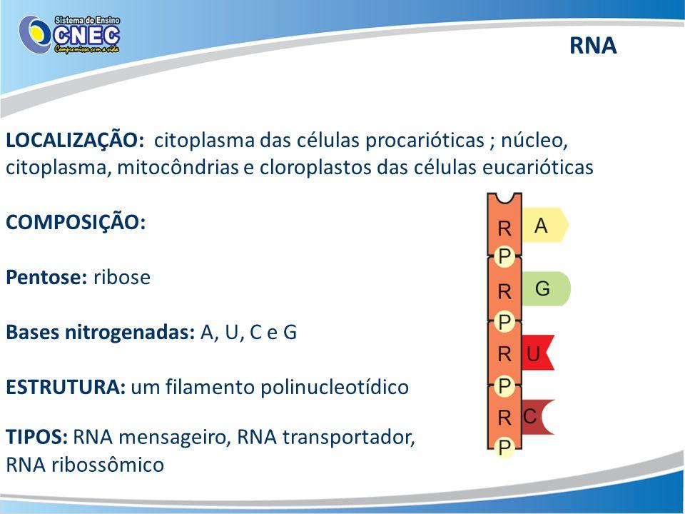RNA LOCALIZAÇÃO: citoplasma das células procarióticas ; núcleo, citoplasma, mitocôndrias e cloroplastos das células eucarióticas.