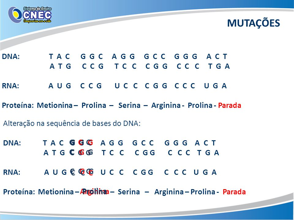 MUTAÇÕES DNA: T A C G G C A G G G C C G G G A C T