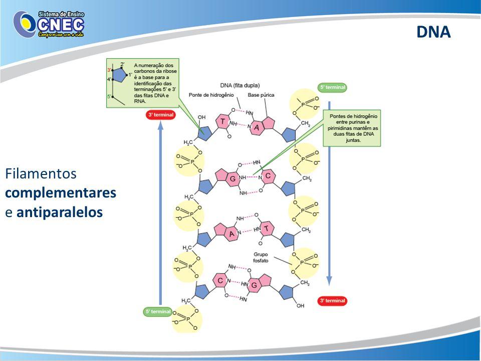 DNA Filamentos complementares e antiparalelos
