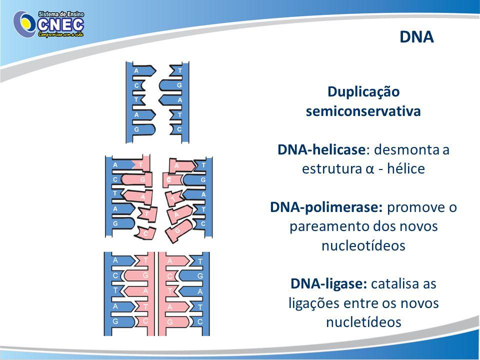 Duplicação semiconservativa