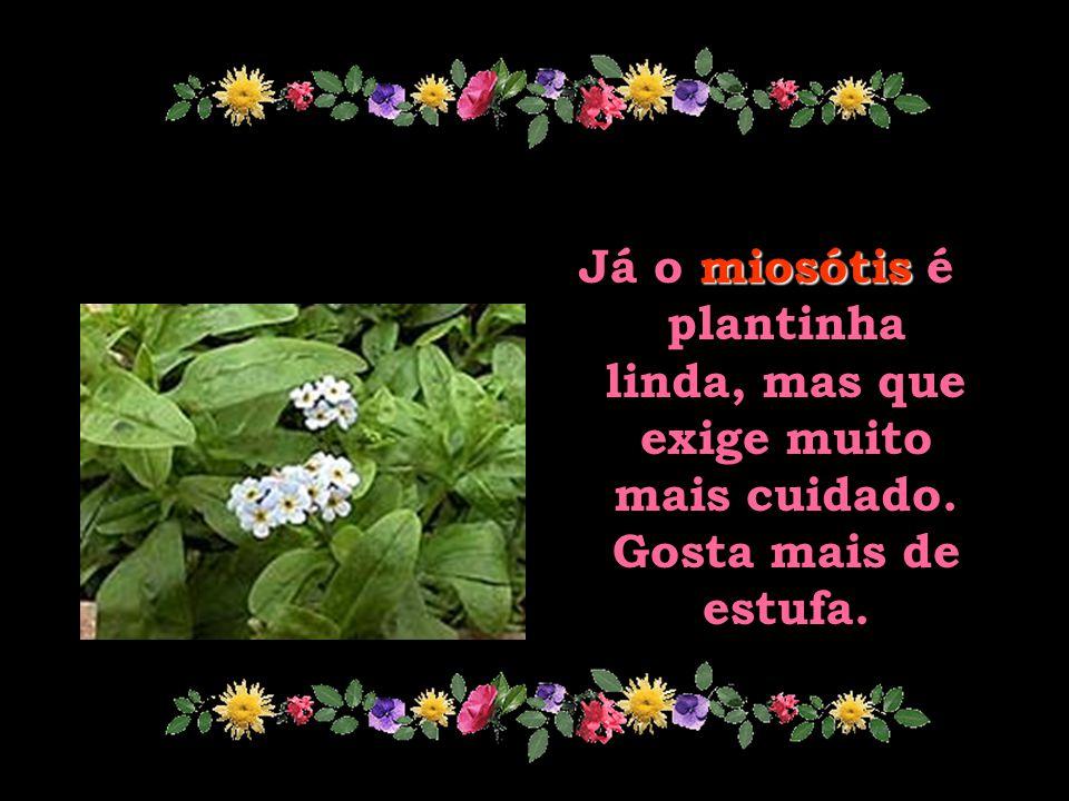 Já o miosótis é plantinha linda, mas que exige muito mais cuidado