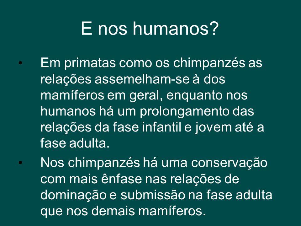 E nos humanos