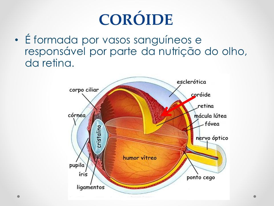 CORÓIDE É formada por vasos sanguíneos e responsável por parte da nutrição do olho, da retina.