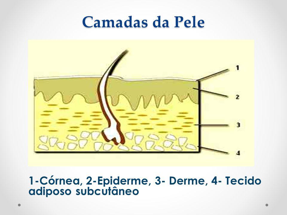 Camadas da Pele 1-Córnea, 2-Epiderme, 3- Derme, 4- Tecido adiposo subcutâneo