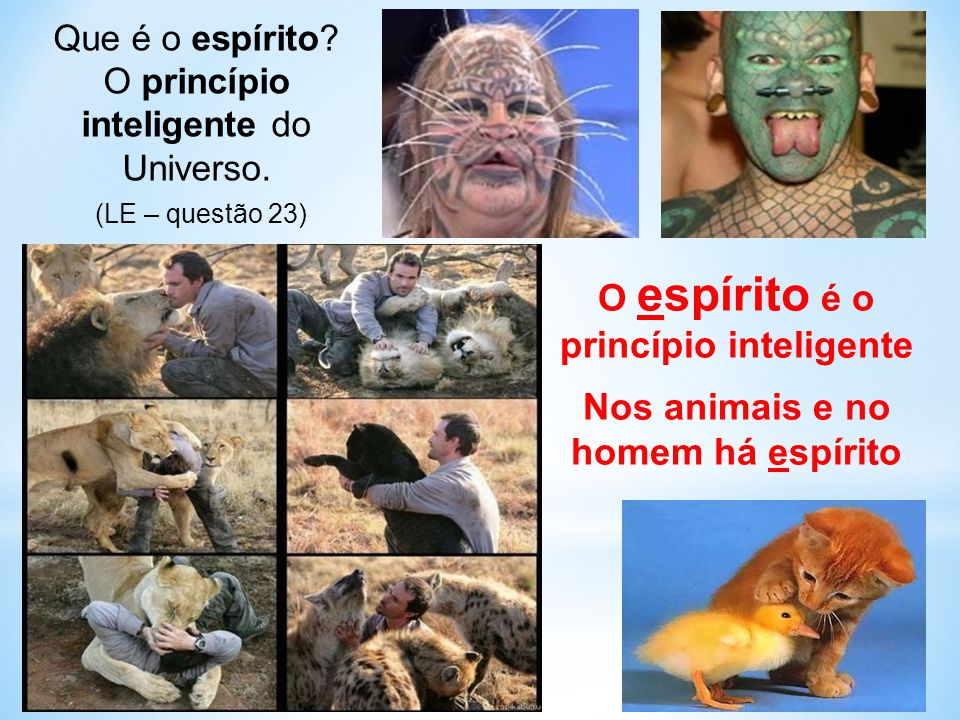 O espírito é o princípio inteligente
