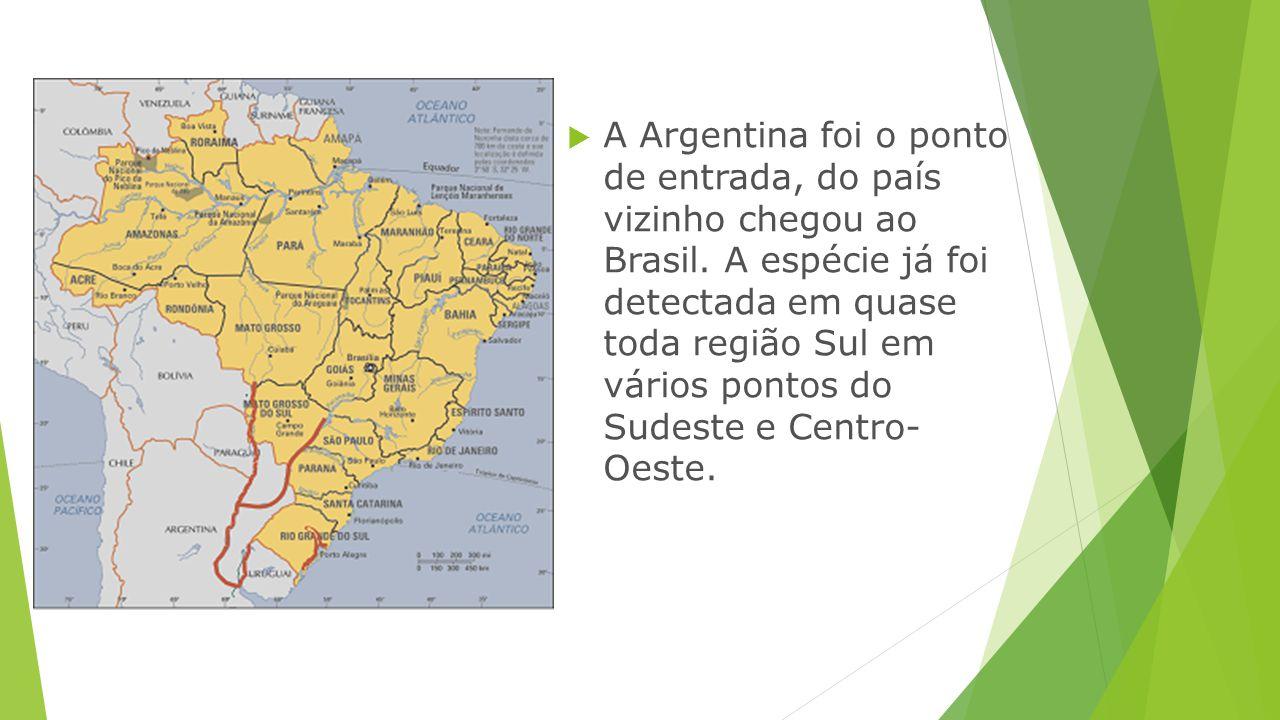 A Argentina foi o ponto de entrada, do país vizinho chegou ao Brasil