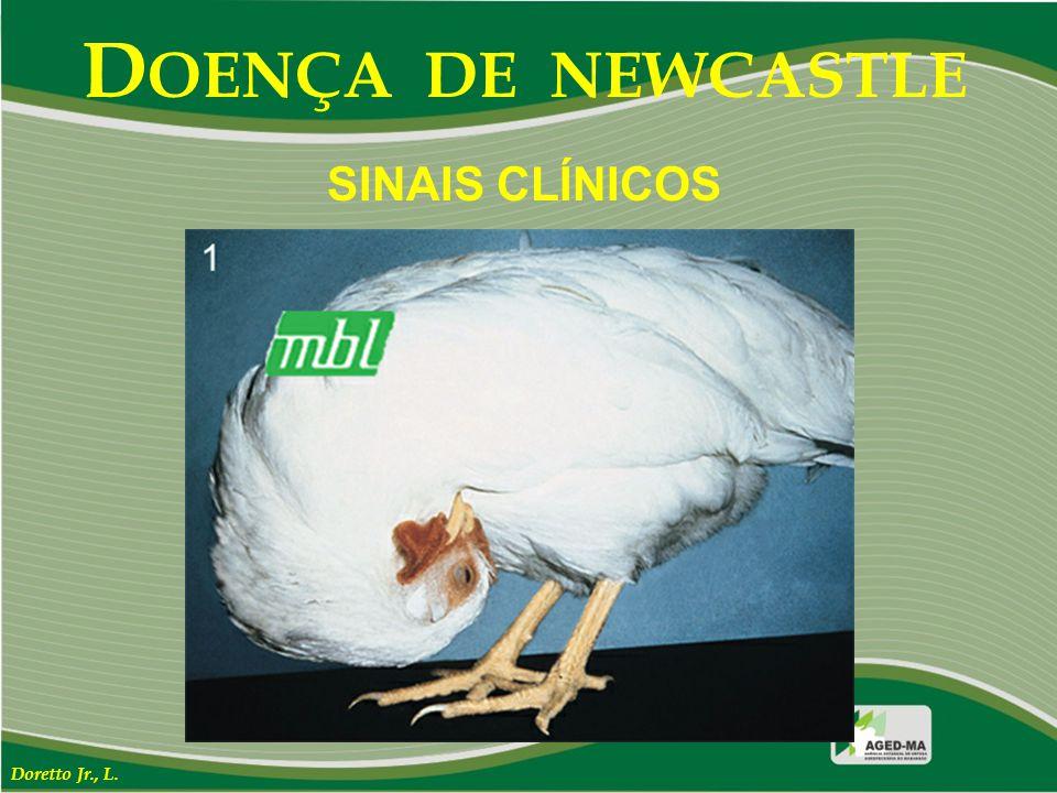 DOENÇA DE NEWCASTLE SINAIS CLÍNICOS Doretto Jr., L.