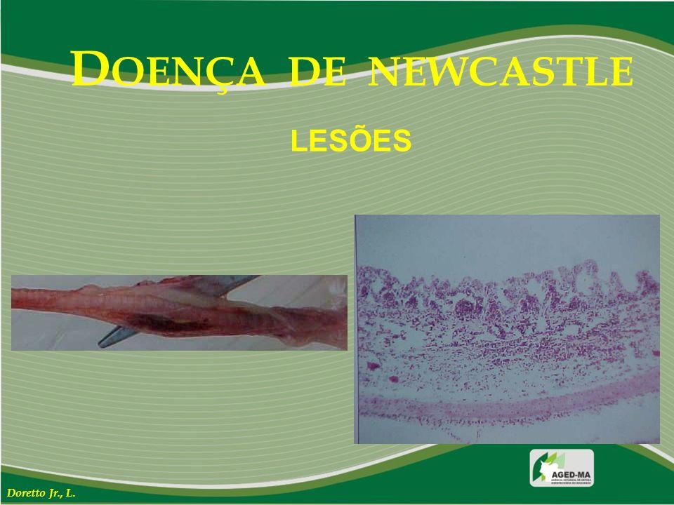 DOENÇA DE NEWCASTLE LESÕES Doretto Jr., L.
