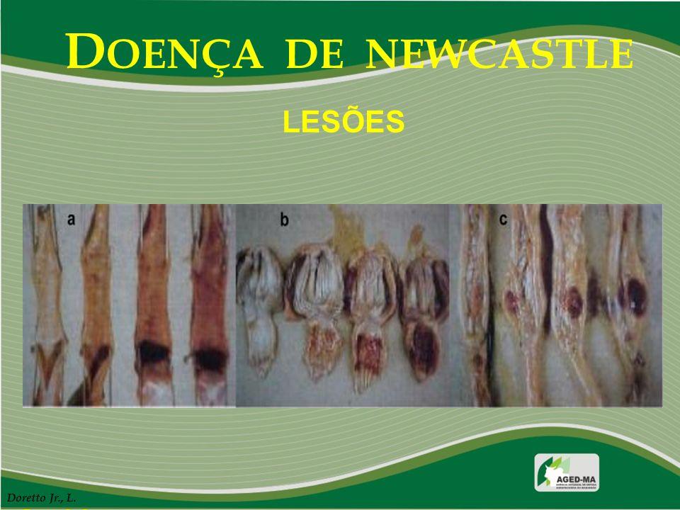 DOENÇA DE NEWCASTLE LESÕES Doretto Jr., L. Doretto Jr., L.