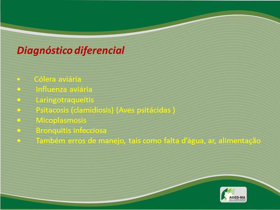 Diagnóstico diferencial · Cólera aviária · Influenza aviária · Laringotraqueítis · Psitacosis (clamidiosis) (Aves psitácidas ) · Micoplasmosis · Bronquitis infecciosa · Também erros de manejo, tais como falta d'água, ar, alimentação