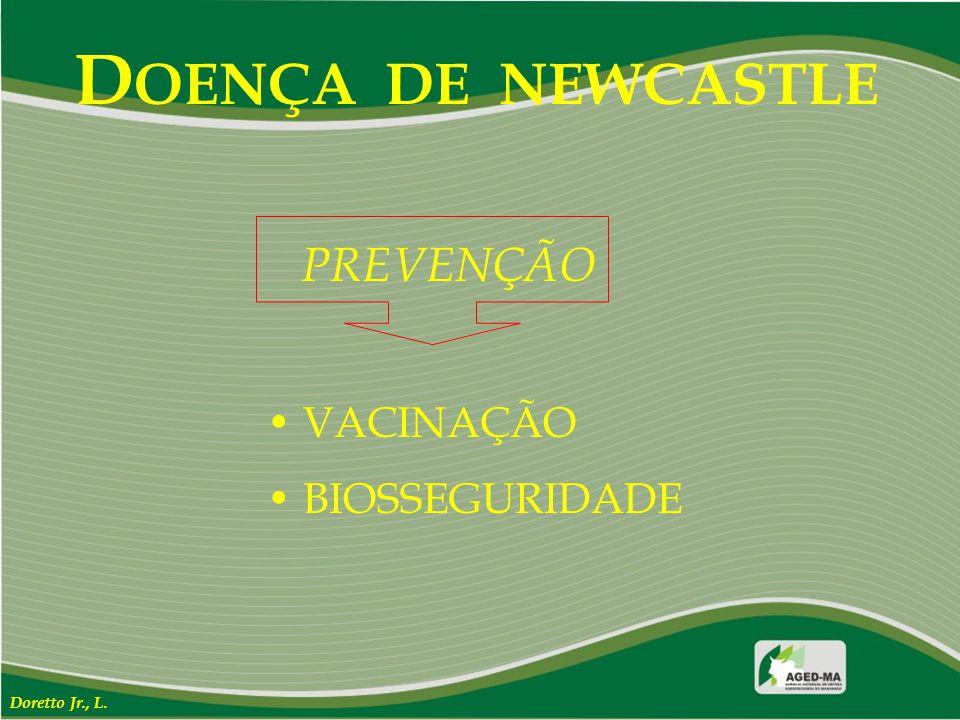 DOENÇA DE NEWCASTLE PREVENÇÃO VACINAÇÃO BIOSSEGURIDADE Doretto Jr., L.