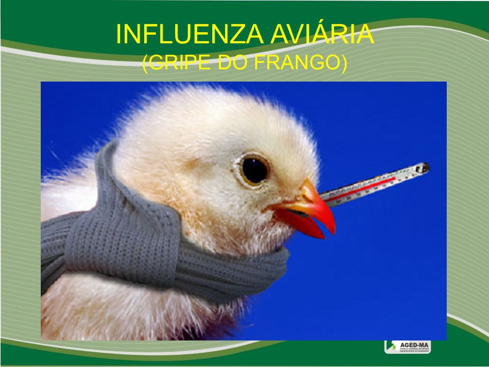 INFLUENZA AVIÁRIA (GRIPE DO FRANGO)