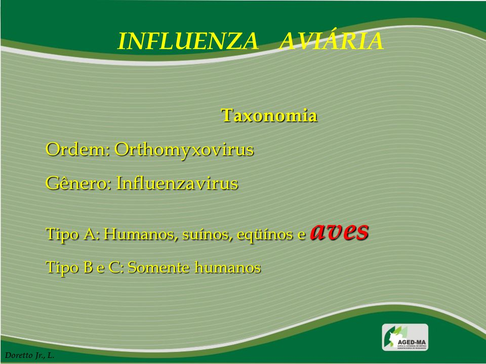 INFLUENZA AVIÁRIA Taxonomia Ordem: Orthomyxovirus