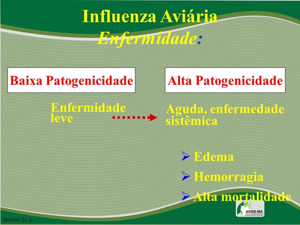 Influenza Aviária Enfermidade: