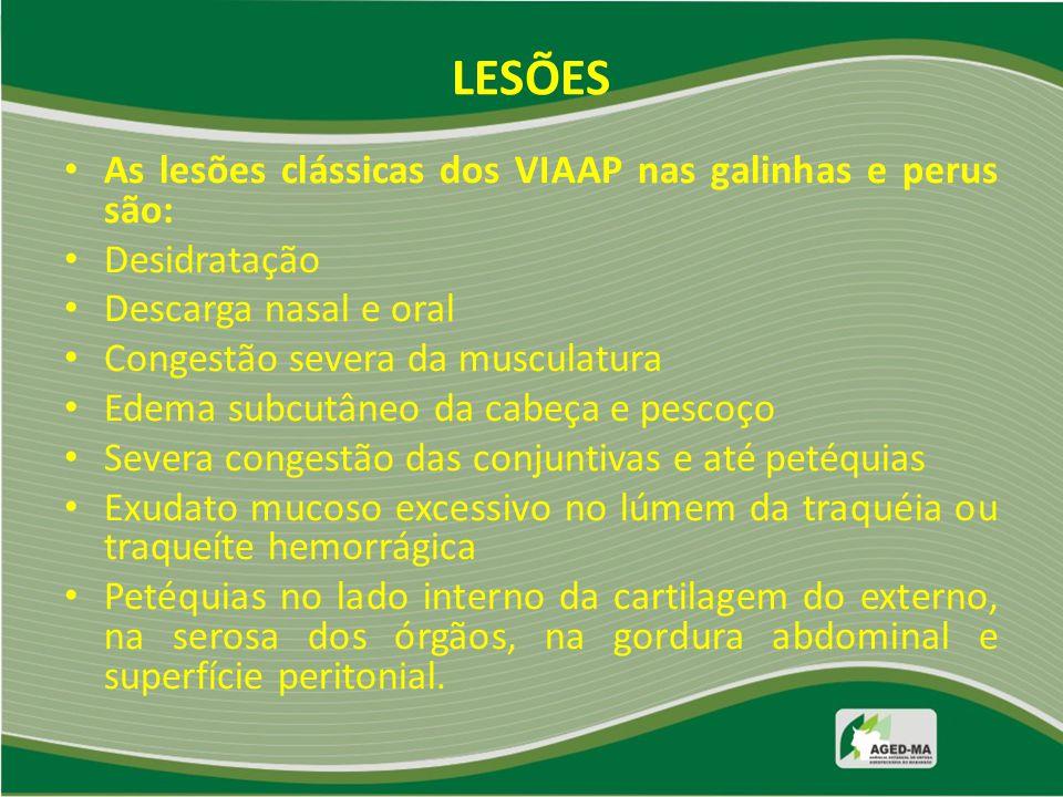 LESÕES As lesões clássicas dos VIAAP nas galinhas e perus são: