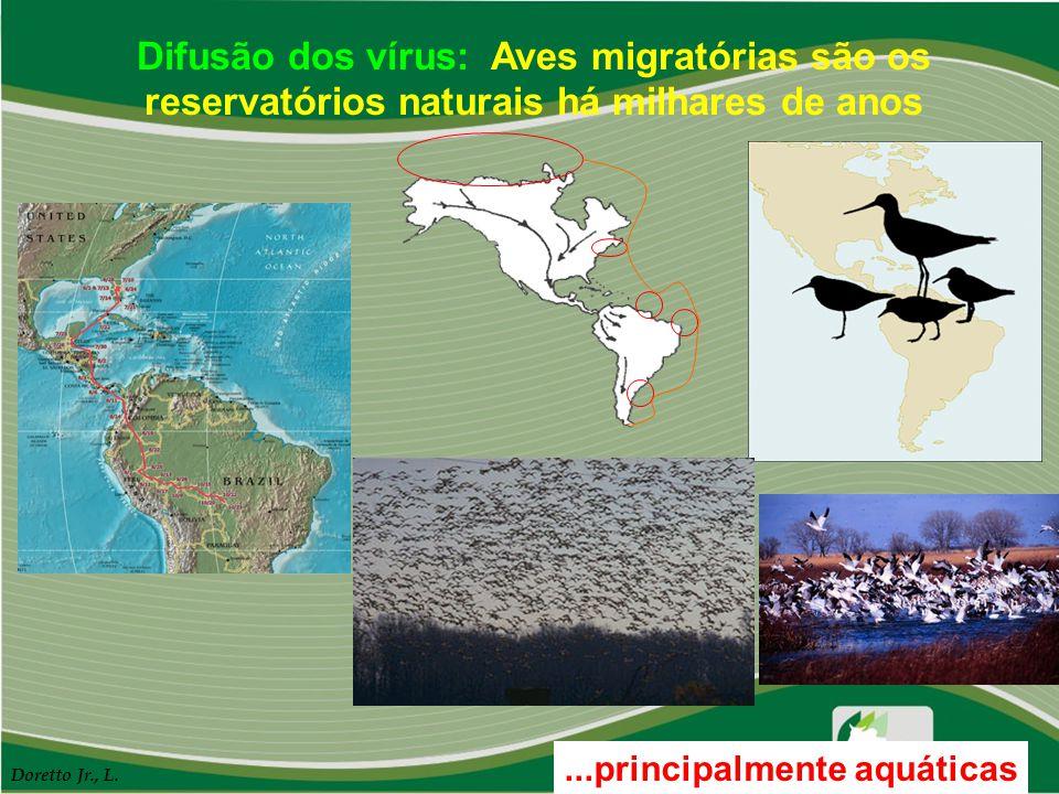 Difusão dos vírus: Aves migratórias são os reservatórios naturais há milhares de anos
